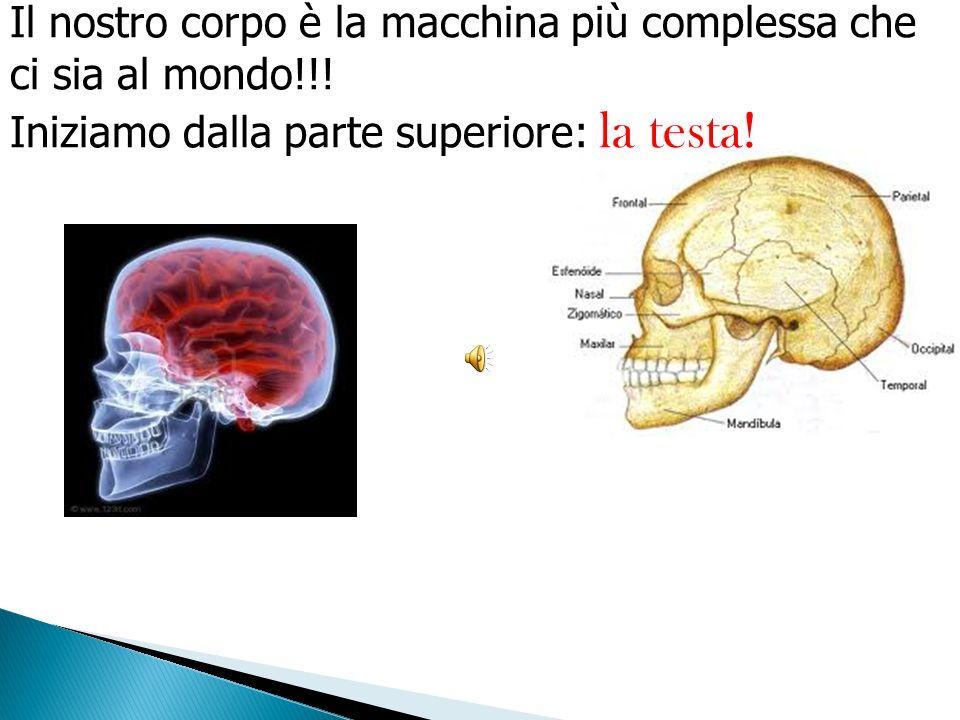 Il nostro corpo è la macchina più complessa che ci sia al mondo!!!