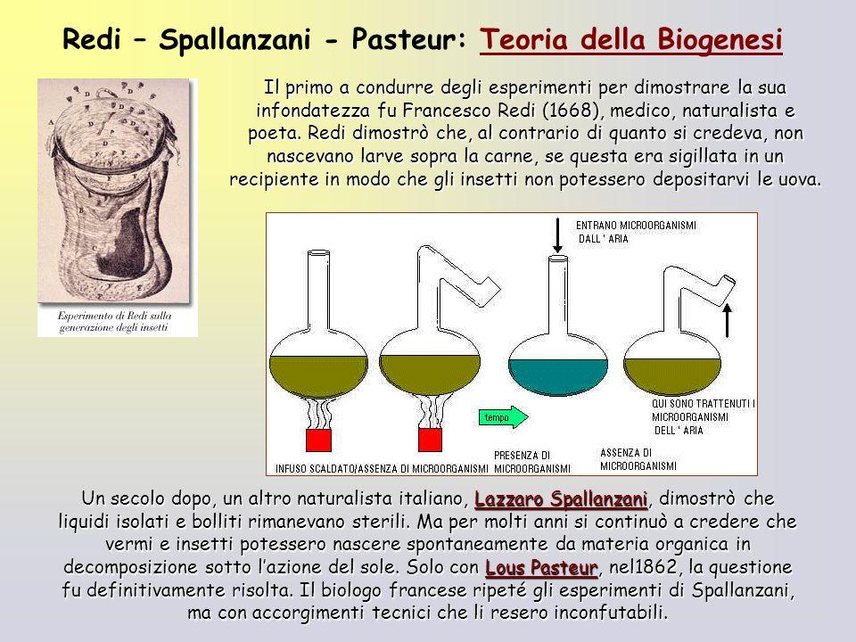 Redi – Spallanzani - Pasteur: Teoria della Biogenesi