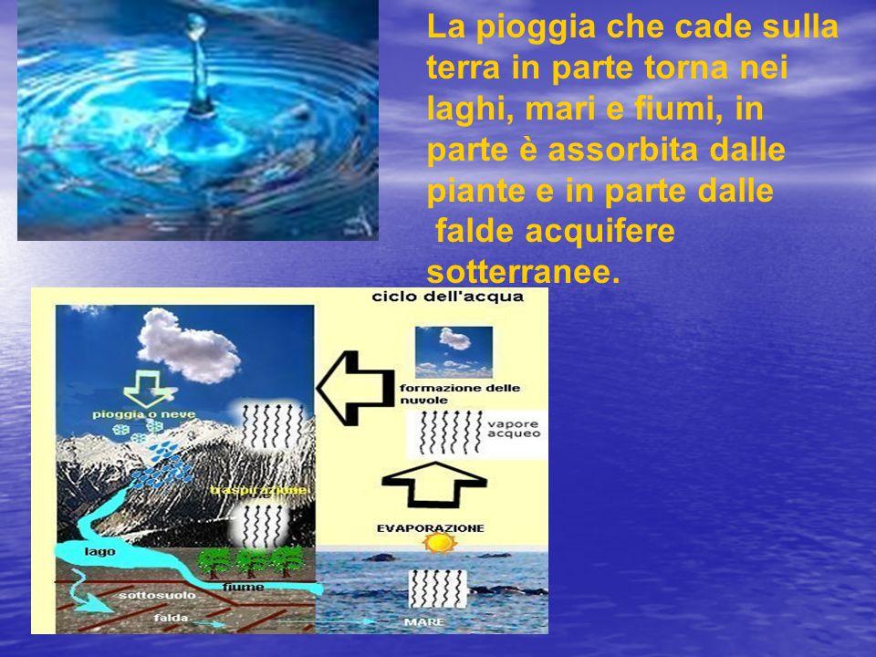 La pioggia che cade sulla terra in parte torna nei laghi, mari e fiumi, in parte è assorbita dalle piante e in parte dalle
