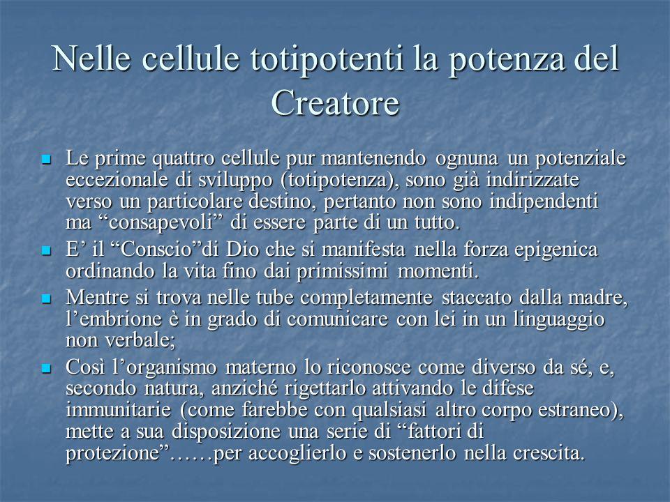 Nelle cellule totipotenti la potenza del Creatore