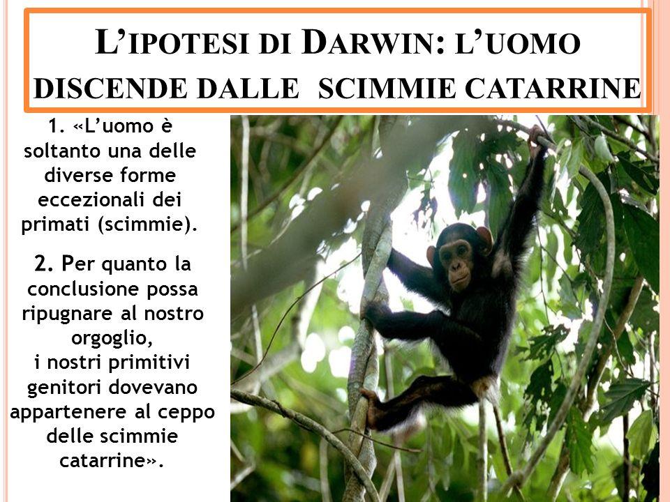 L'ipotesi di Darwin: l'uomo discende dalle scimmie catarrine