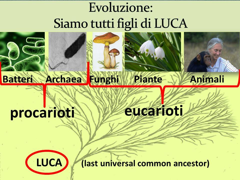 Evoluzione: Siamo tutti figli di LUCA