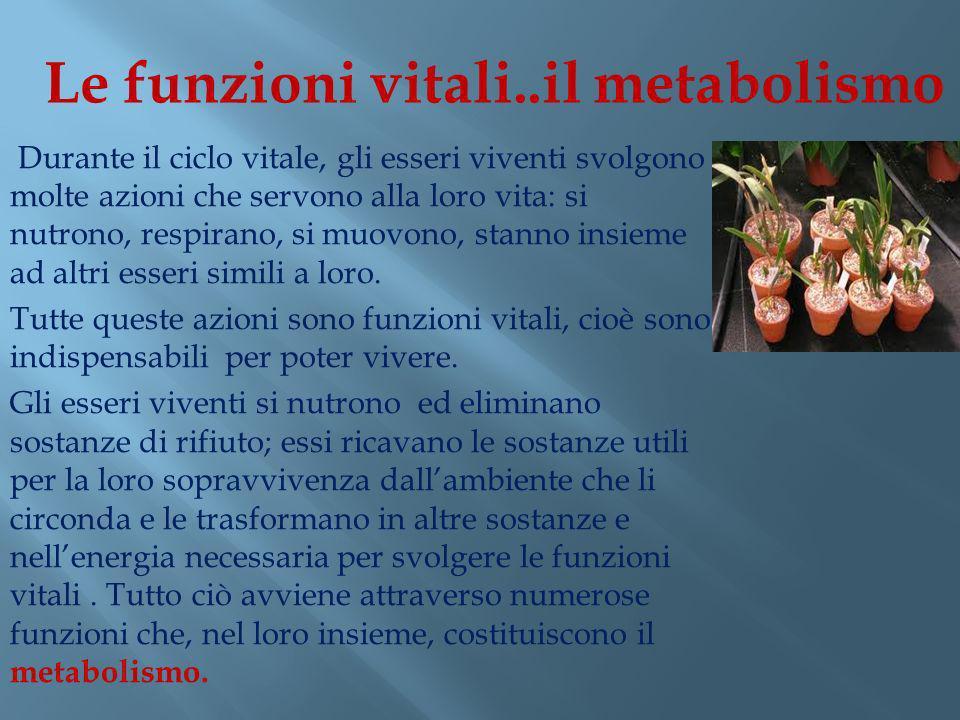 Le funzioni vitali..il metabolismo