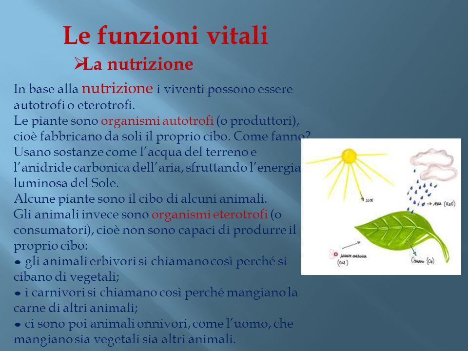 Le funzioni vitali La nutrizione