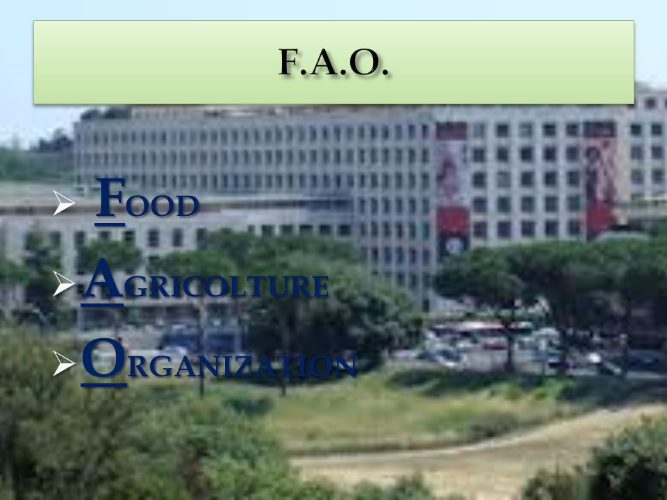 F.A.O. FOOD AGRICOLTURE ORGANIZATION
