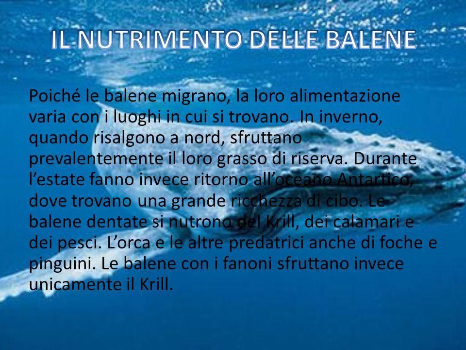 IL NUTRIMENTO DELLE BALENE