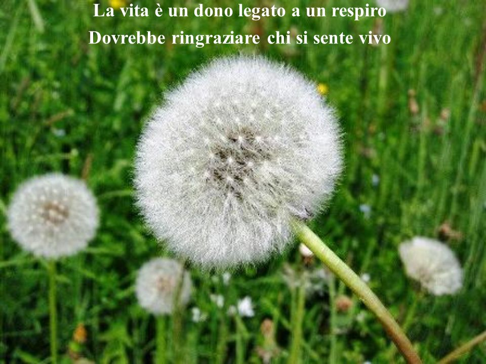 La vita è un dono legato a un respiro