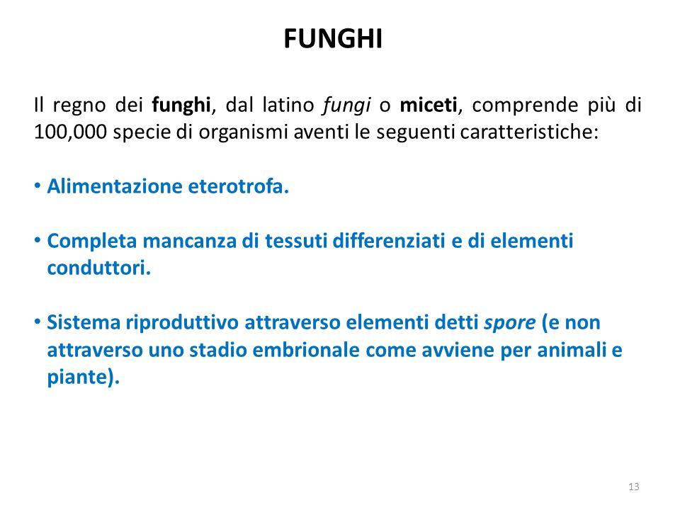 FUNGHI Il regno dei funghi, dal latino fungi o miceti, comprende più di 100,000 specie di organismi aventi le seguenti caratteristiche: