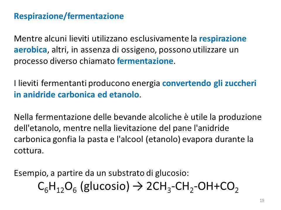 C6H12O6 (glucosio) → 2CH3-CH2-OH+CO2