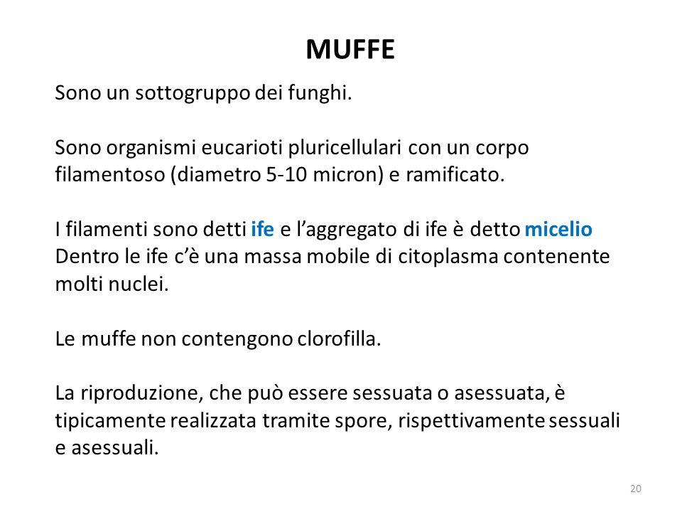 MUFFE Sono un sottogruppo dei funghi.