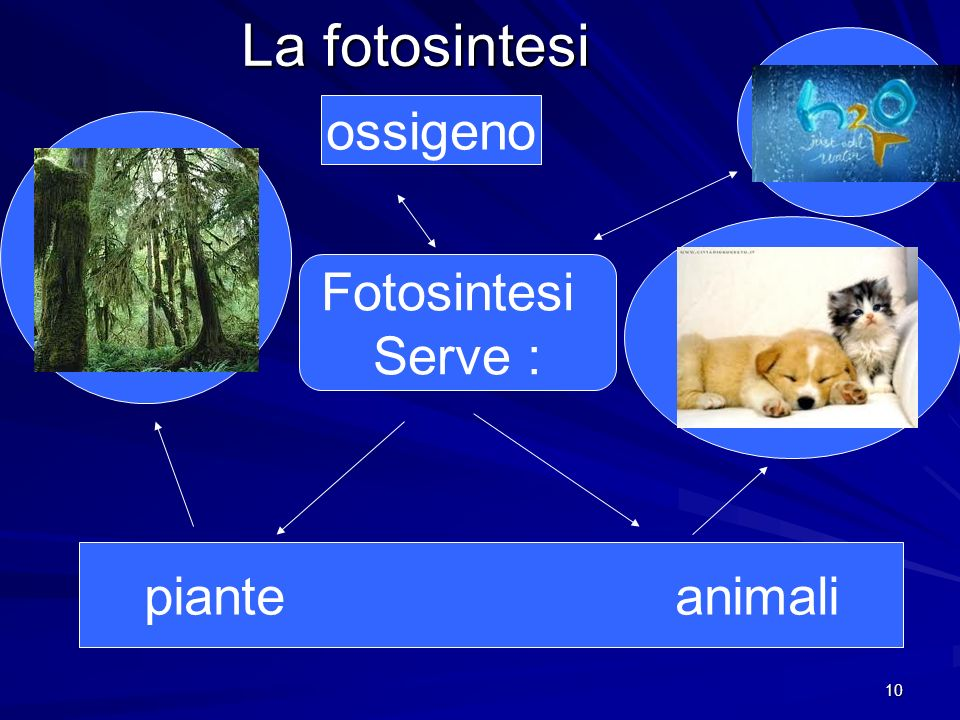 La fotosintesi ossigeno Fotosintesi Serve : piante animali