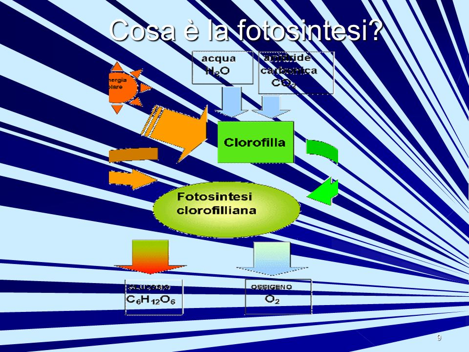 Cosa è la fotosintesi
