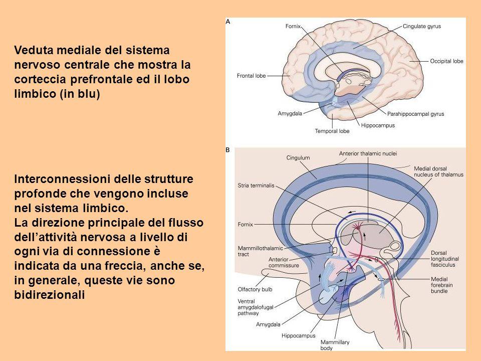 Veduta mediale del sistema nervoso centrale che mostra la corteccia prefrontale ed il lobo limbico (in blu)