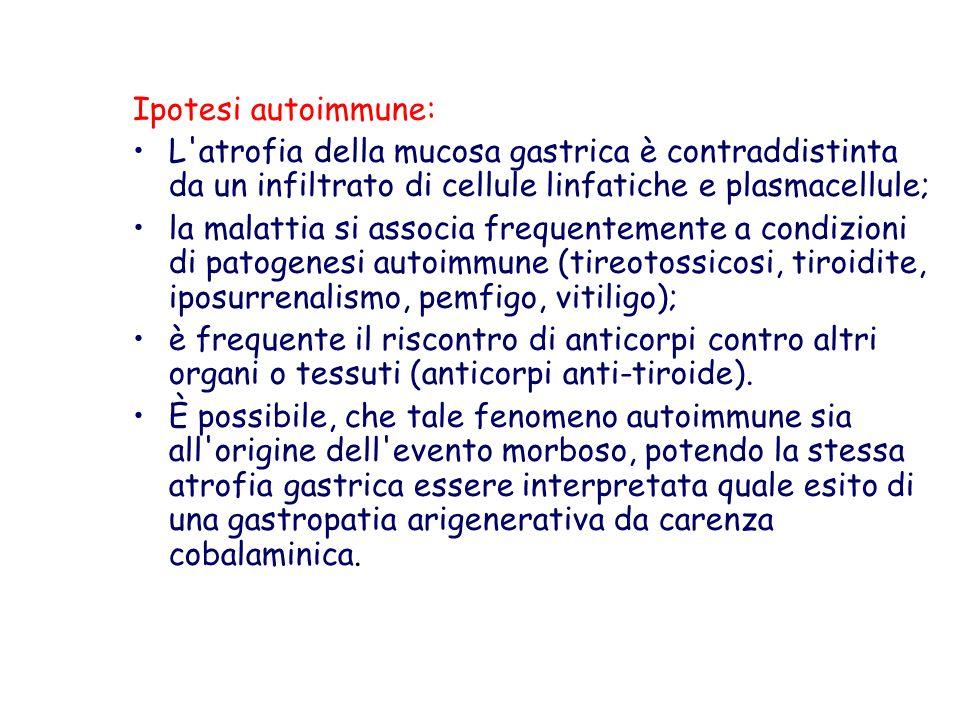 Ipotesi autoimmune: L atrofia della mucosa gastrica è contraddistinta da un infiltrato di cellule linfatiche e plasmacellule;
