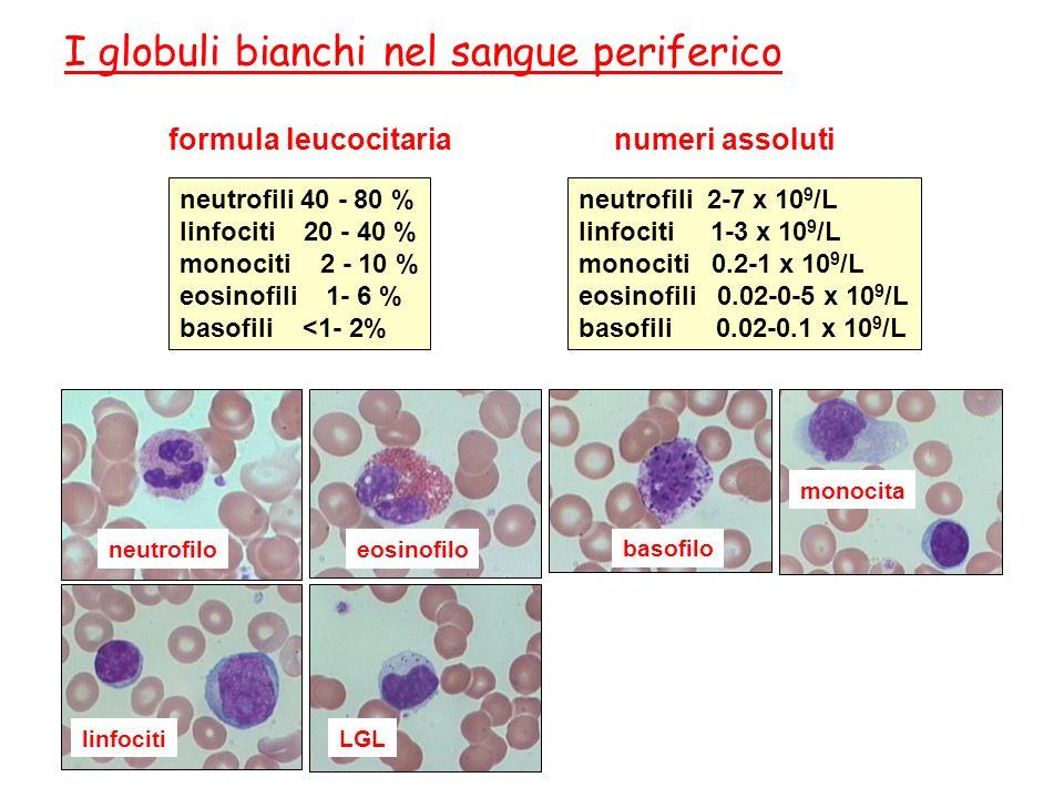 I globuli bianchi nel sangue periferico