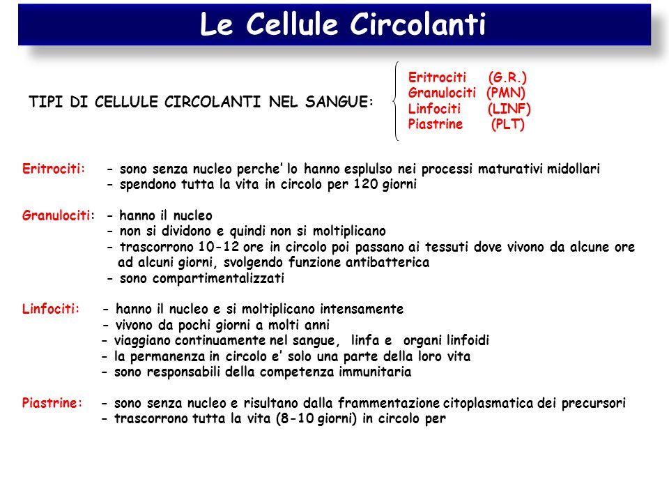 Le Cellule Circolanti TIPI DI CELLULE CIRCOLANTI NEL SANGUE: