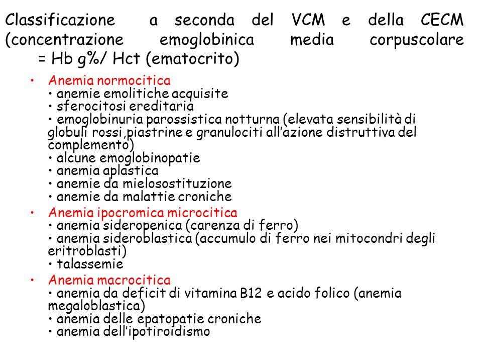 Classificazione a seconda del VCM e della CECM (concentrazione emoglobinica media corpuscolare = Hb g%/ Hct (ematocrito)