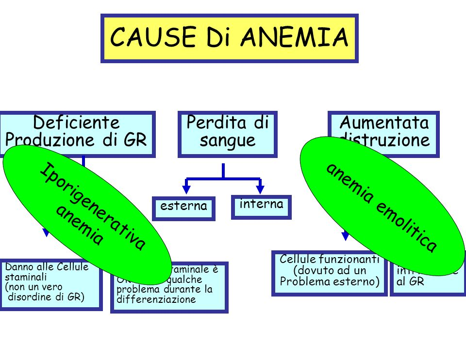 CAUSE Di ANEMIA Deficiente Produzione di GR Perdita di sangue