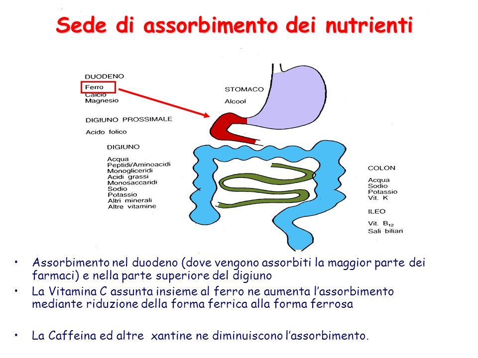 Sede di assorbimento dei nutrienti