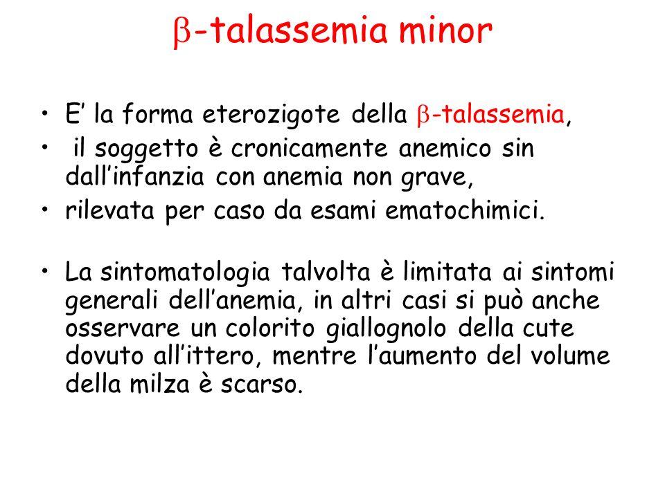 b-talassemia minor E' la forma eterozigote della b-talassemia,