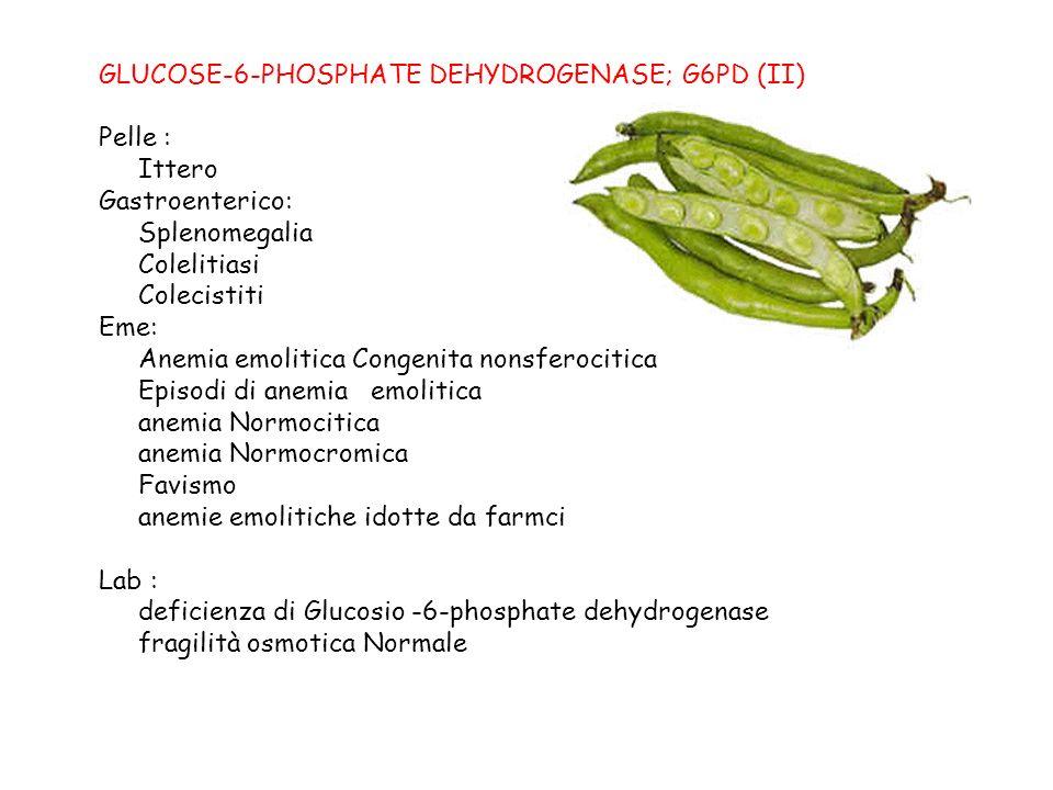 GLUCOSE-6-PHOSPHATE DEHYDROGENASE; G6PD (II)