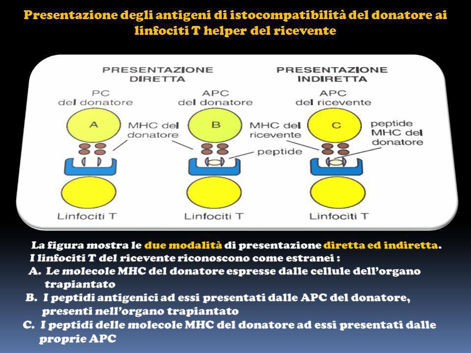 Presentazione degli antigeni di istocompatibilità del donatore ai linfociti T helper del ricevente