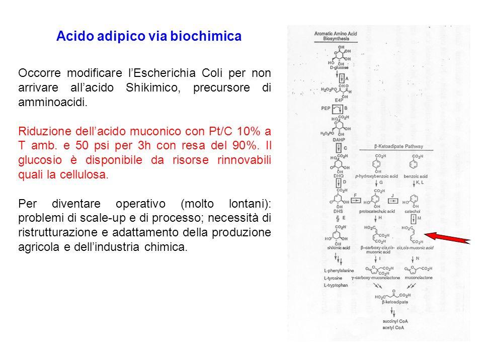 Acido adipico via biochimica