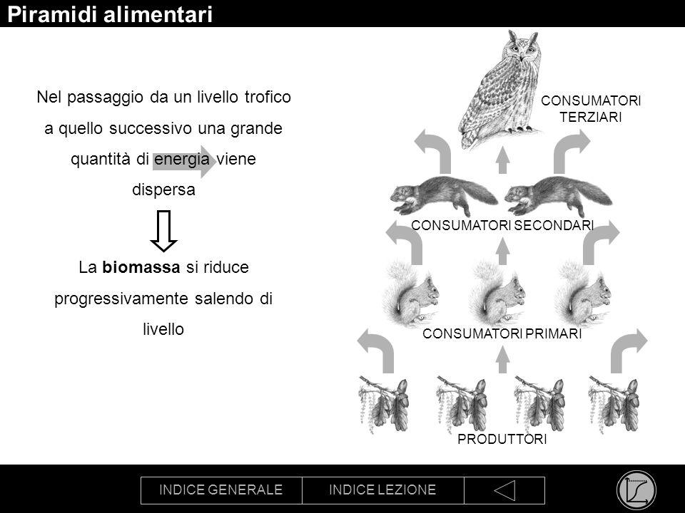Piramidi alimentari Nel passaggio da un livello trofico a quello successivo una grande quantità di energia viene dispersa.