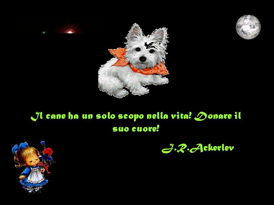 Il cane ha un solo scopo nella vita! Donare il suo cuore!