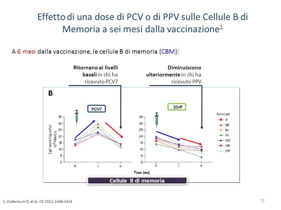 Effetto di una dose di PCV o di PPV sulle Cellule B di Memoria a sei mesi dalla vaccinazione1