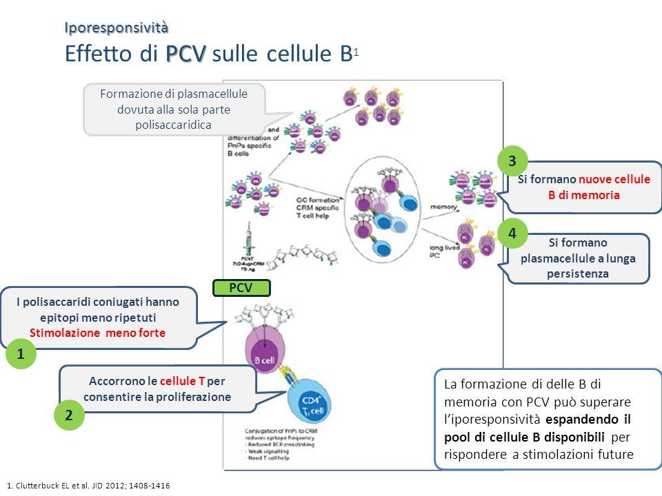 Iporesponsività Effetto di PCV sulle cellule B1