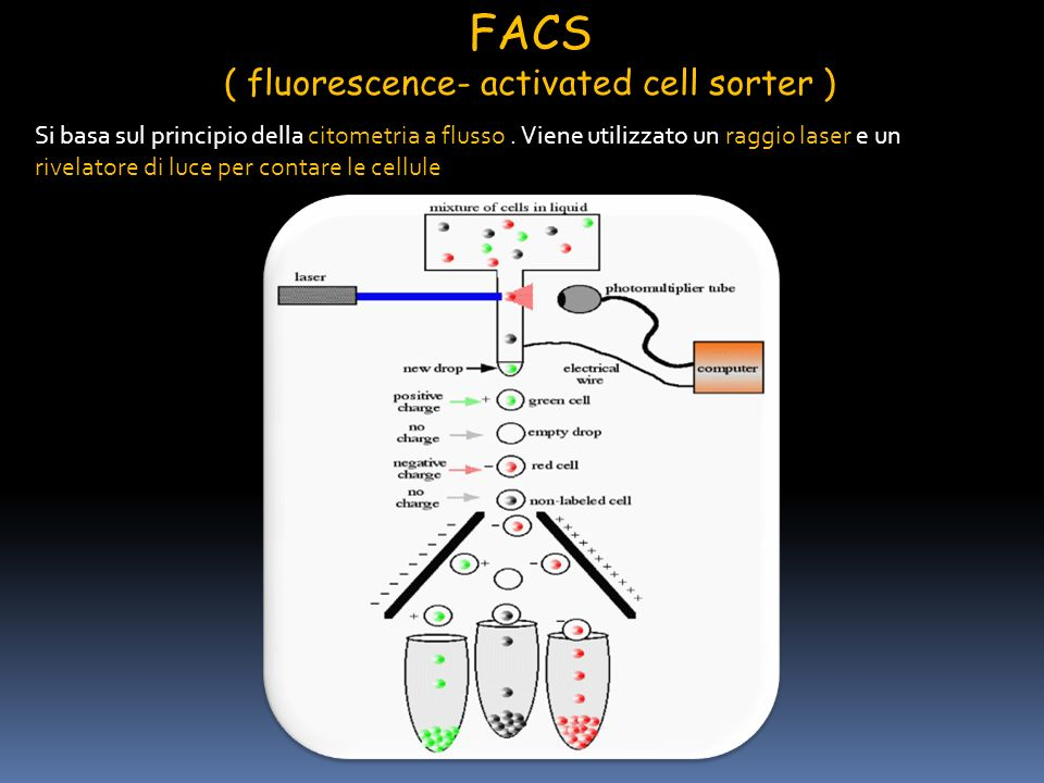 ( fluorescence- activated cell sorter )