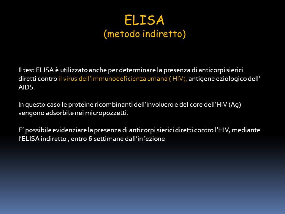 ELISA (metodo indiretto)