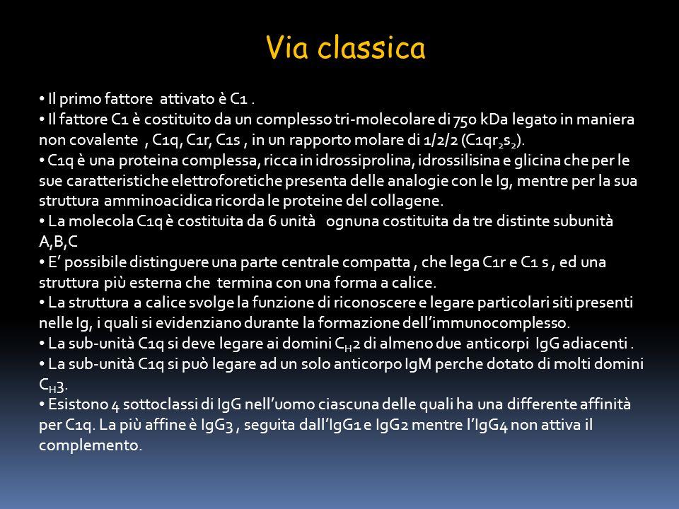 Via classica Il primo fattore attivato è C1 .