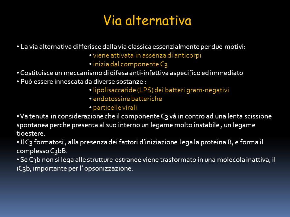 Via alternativa La via alternativa differisce dalla via classica essenzialmente per due motivi: viene attivata in assenza di anticorpi.