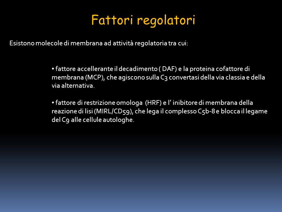 Fattori regolatori Esistono molecole di membrana ad attività regolatoria tra cui: