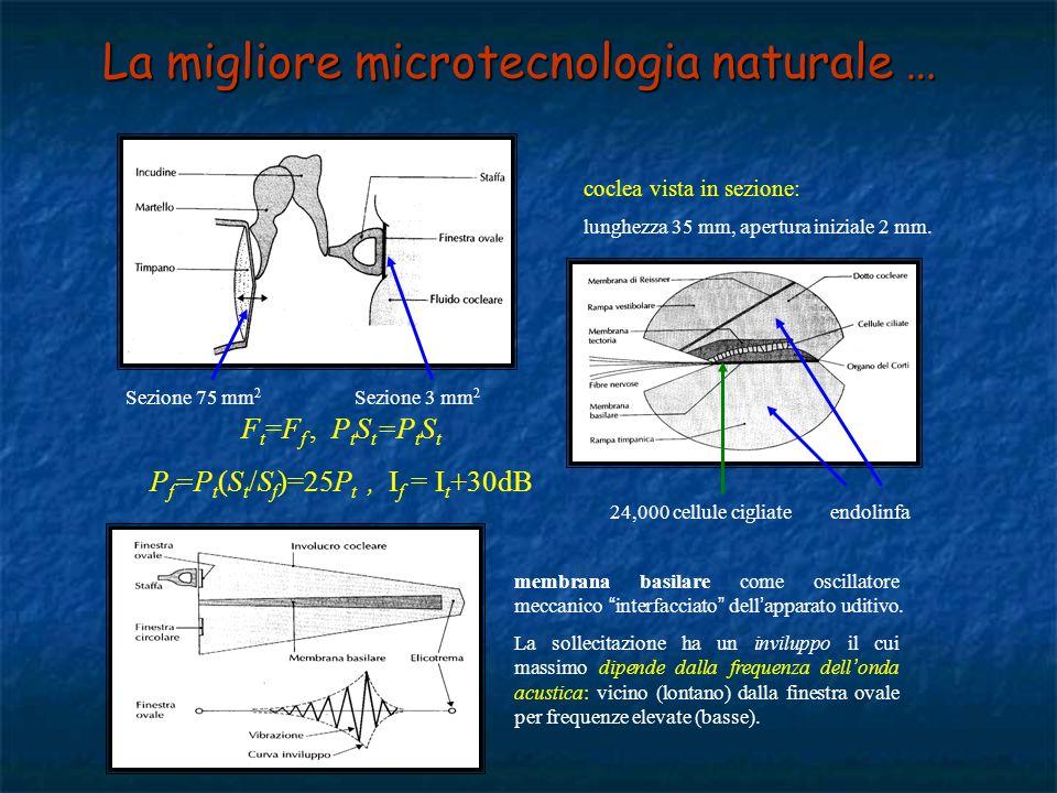 La migliore microtecnologia naturale …