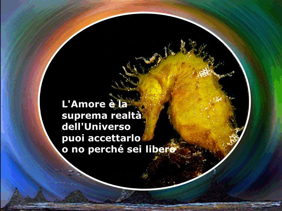 L Amore è la suprema realtà dell Universo puoi accettarlo o no perché sei libero