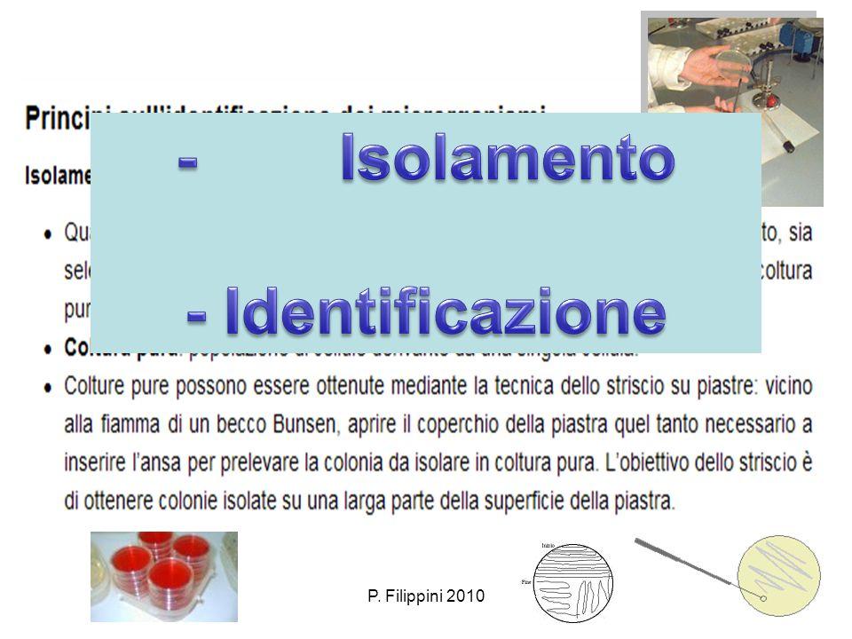 - Isolamento - Identificazione