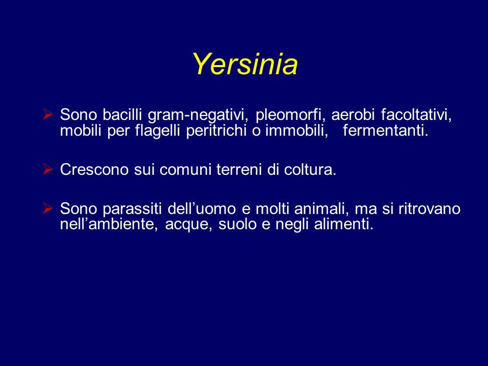 Yersinia Sono bacilli gram-negativi, pleomorfi, aerobi facoltativi, mobili per flagelli peritrichi o immobili, fermentanti.