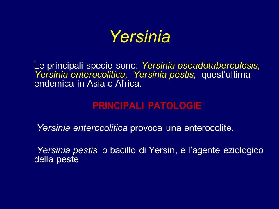 Yersinia Le principali specie sono: Yersinia pseudotuberculosis, Yersinia enterocolitica, Yersinia pestis, quest'ultima endemica in Asia e Africa.