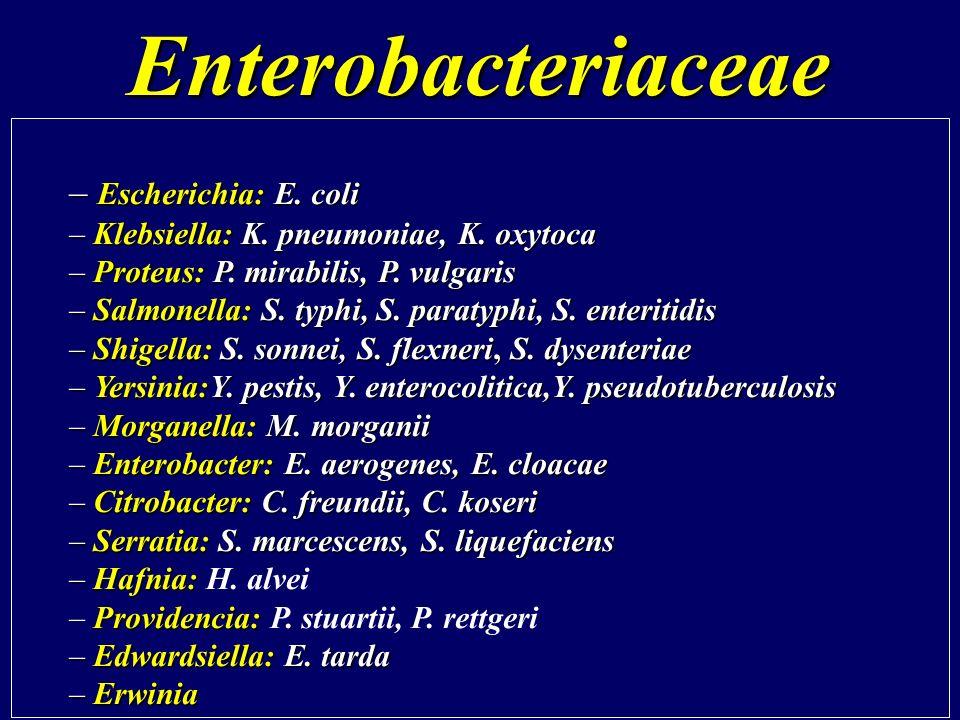 Enterobacteriaceae Escherichia: E. coli