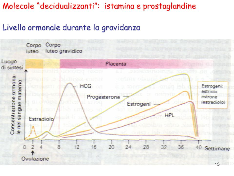 Molecole decidualizzanti : istamina e prostaglandine