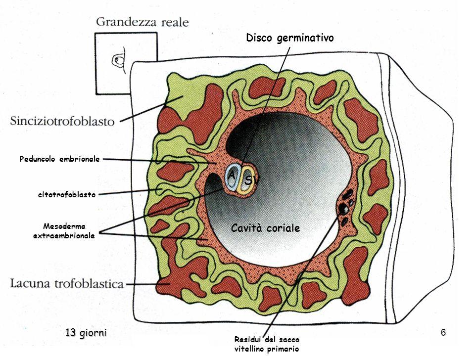 Mesoderma extraembrionale