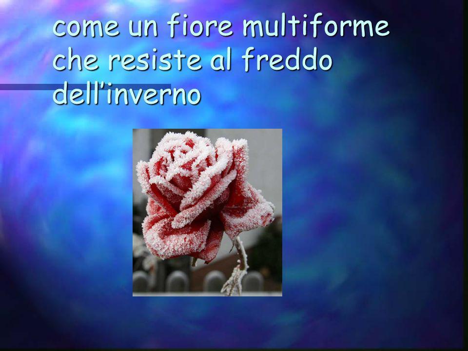 come un fiore multiforme che resiste al freddo dell'inverno