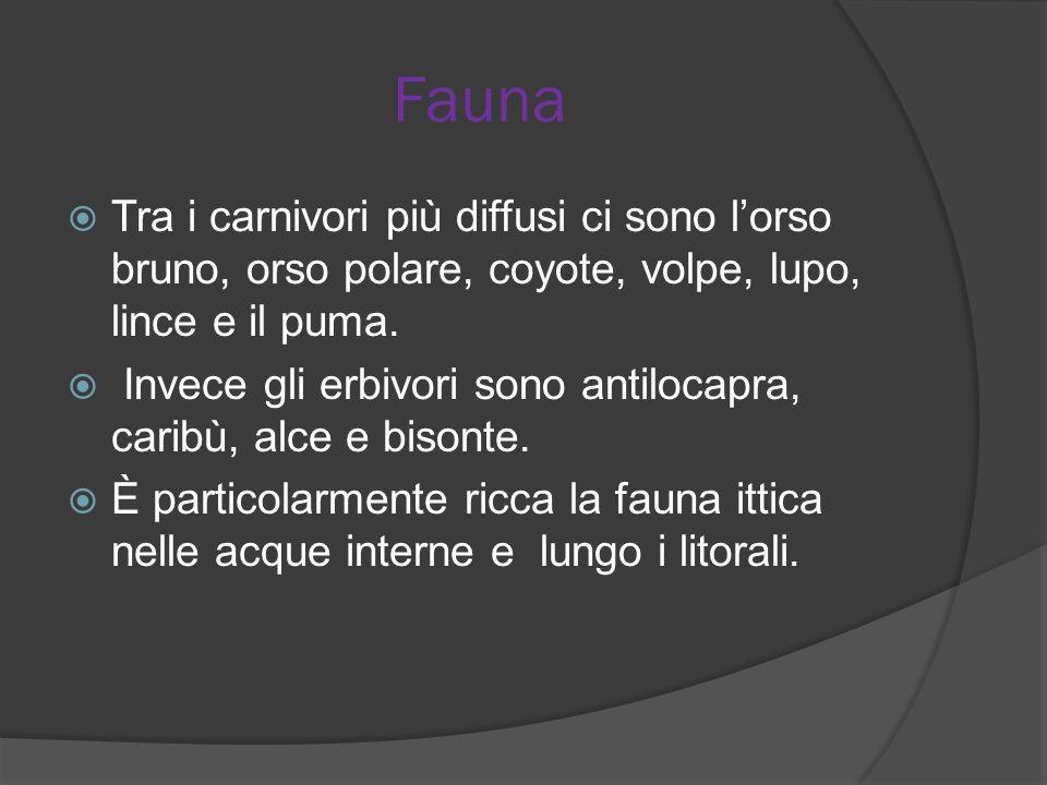 Fauna Tra i carnivori più diffusi ci sono l'orso bruno, orso polare, coyote, volpe, lupo, lince e il puma.