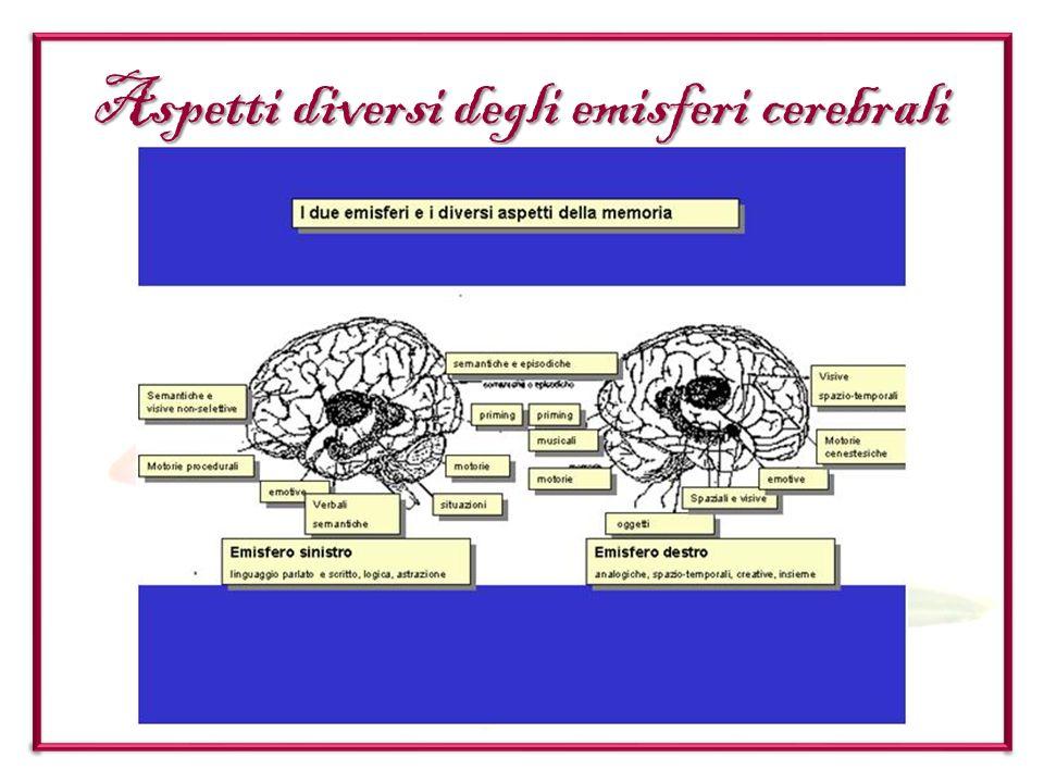 Aspetti diversi degli emisferi cerebrali