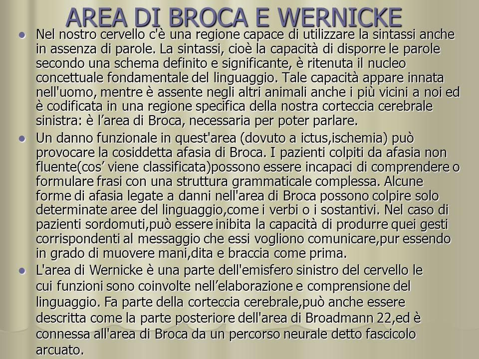 AREA DI BROCA E WERNICKE