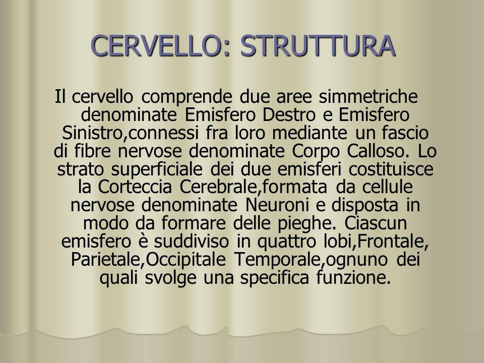 CERVELLO: STRUTTURA