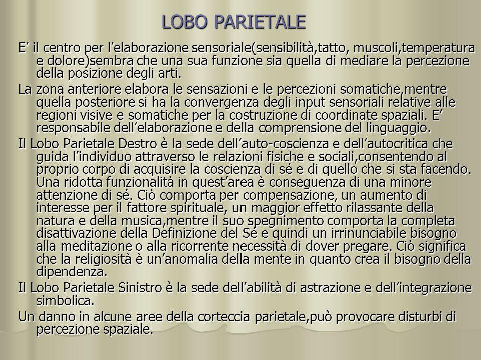 LOBO PARIETALE